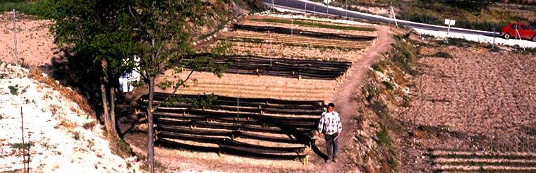 viveros-forestales-alharabe-desde-1995